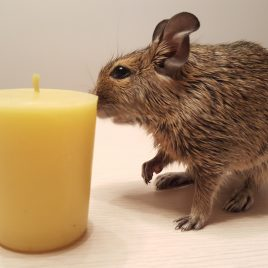 Votive Candle to warm your day. Burning time up to 9 hours