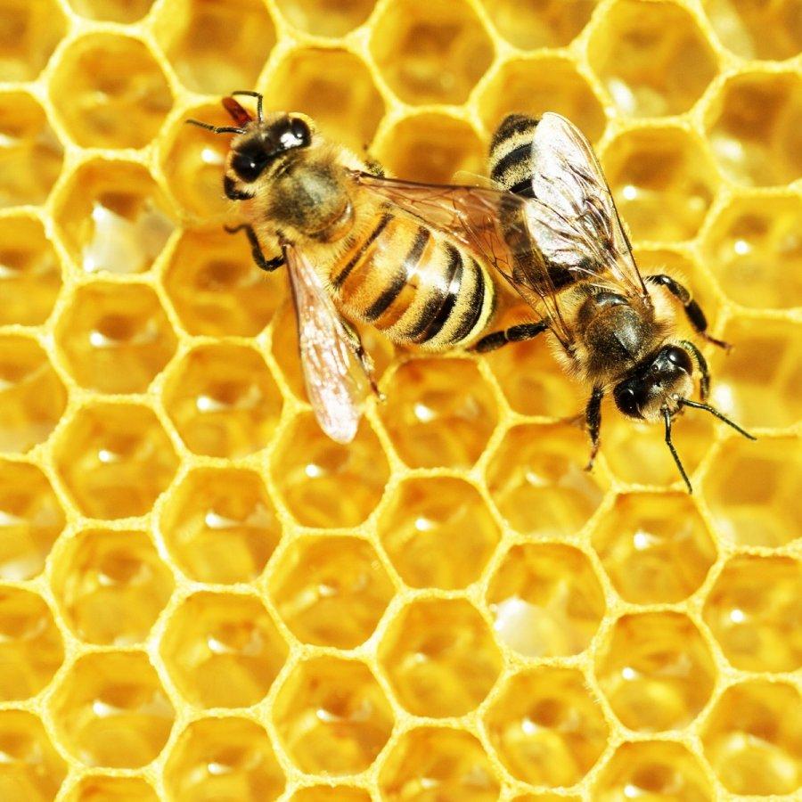 Bees hard work